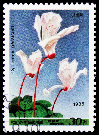 MOSCOW, RUSSIA - JANUARY 4, 2019: A stamp printed in Korea shows Cyclamen persicum, Flowers serie, circa 1985