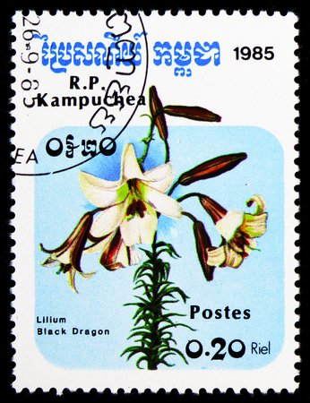 MOSCOW, RUSSIA - FEBRUARY 9, 2019: A stamp printed in Kampuchea (Cambodia) shows Black dragon (Lilium), Flowers serie, circa 1985