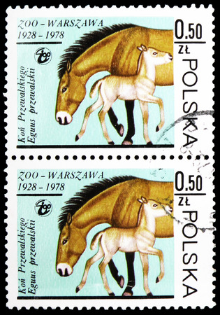 MOSCOW, RUSSIA - FEBRUARY 10, 2019: Two postage stamps printed in Poland shows Przewalski's Horse (Equus przewalskii), Warsaw Zoological Gardens serie, circa 1978
