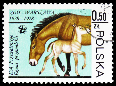 MOSCOW, RUSSIA - FEBRUARY 10, 2019: A stamp printed in Poland shows Przewalski's Horse (Equus przewalskii), Warsaw Zoological Gardens serie, circa 1978