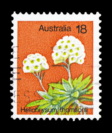 MOSCOW, RUSSIA - FEBRUARY 10, 2019: A stamp printed in Australia shows Helichrysum Thomsonii, Plants serie, circa 1975 Redakční