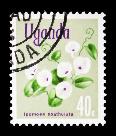 MOSCOW, RUSSIA - FEBRUARY 10, 2019: A stamp printed in Uganda shows Ipomoea spathulata, Native flora serie, circa 1969