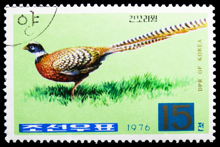 MOSCOW, RUSSIA - FEBRUARY 21, 2019: A stamp printed in Korea shows Reevess Pheasant (Symaticus reevesii), Pheasants serie, circa 1976