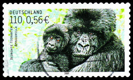 MOSCOW, RUSSIA - FEBRUARY 21, 2019: A stamp printed in Germany, Federal Republic shows Mountain Gorilla (Gorilla beringei beringei), Endangered Animals serie, circa 2001 Imagens - 120303719