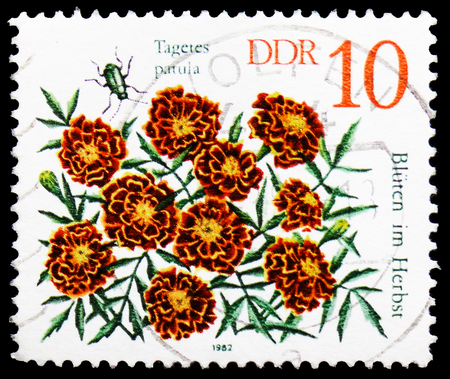 MOSCOW, RUSSIA - FEBRUARY 21, 2019: A stamp printed in Germany, Democratic Republic shows Marigold (Tagetes patula), Autumn Flowers serie, circa 1982