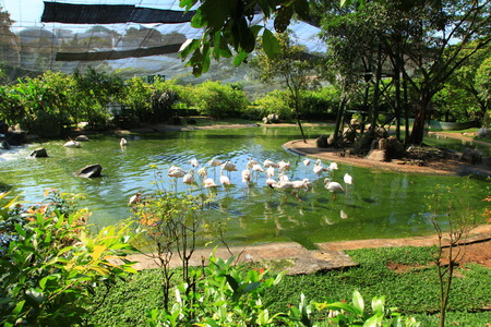 A flock of flamingos on a green lake surrounded by trees and grass Stok Fotoğraf - 122896940