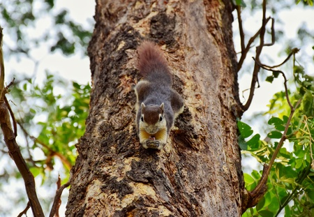 Chipmunk on the park, Bangkok Thailand.