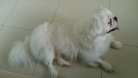 sitting on the ground: A blind dog look like seeing in home.