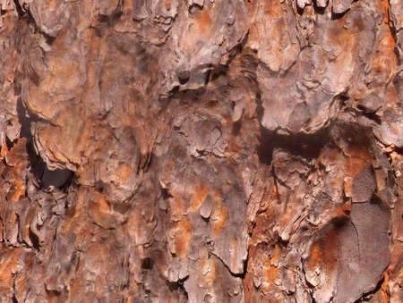Seamless tree bark background tile