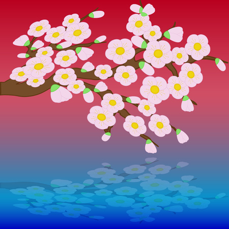 Card with stylized cherry blossom flowers and its reflex on water. Vector illustration on color background.