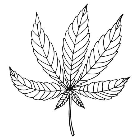 marihuana leaf: Bosquejo de marihuana aislado sobre fondo blanco. Ilustraci�n vectorial de una hoja de c��amo.