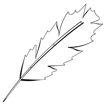 Vector freehand drawing black bird feather isolated on white background. Fully editable element design sketch pen. Vector