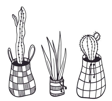 vector house plant and cacti in cute pots illustration