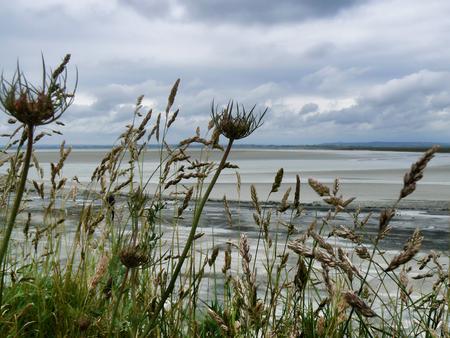 Ocean coast low tide flowers Stock Photo