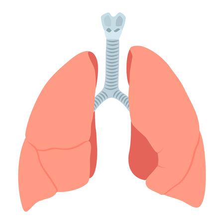 pulmonology: Anatomic lungs illustration on white background Illustration