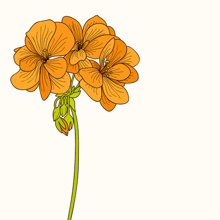 botanics: Yellow geranium flower drawing