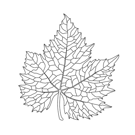 leaf line: Black on white grape leaf line art Illustration