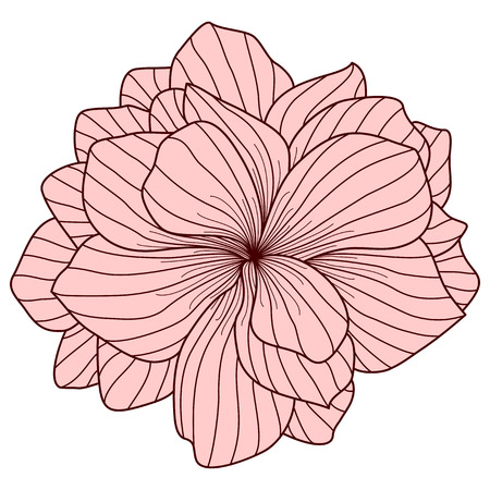 floriculture: Pink Begonia flower on white background