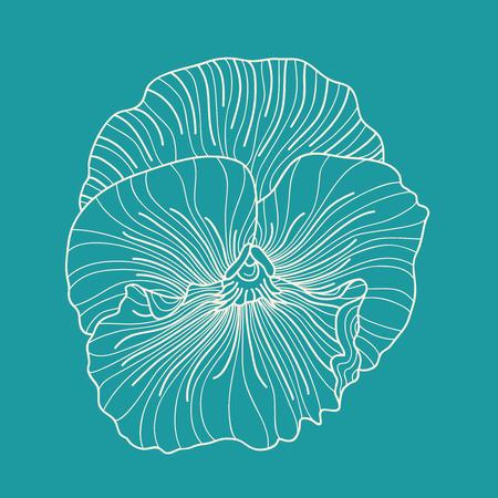 dessin fleur: Pansy dessin de fleurs Illustration