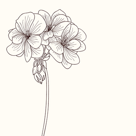 botanics: Geranium flower drawing