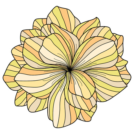 floriculture: Yellow Begonia flower on white background