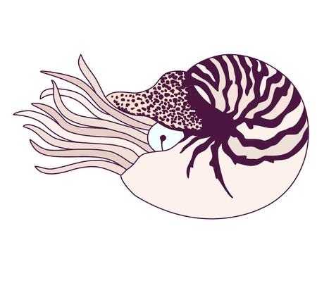clam illustration: Nautilus Pompilius illustration Illustration