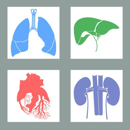 hepatology: Set of human organs illustrations Illustration