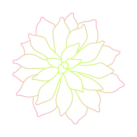 botanics: Line art succulent plant on white background Illustration