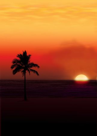 the setting sun: Palm against a setting sun..