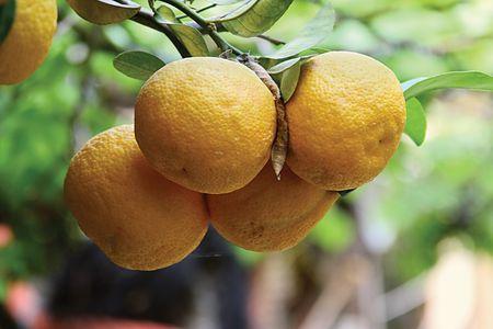 mandarine Stock Photo - 445969