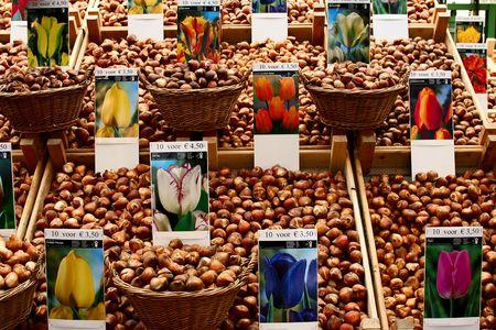 agronomy: flower market   tulip bulbs in an Amsterdam flower market Stock Photo