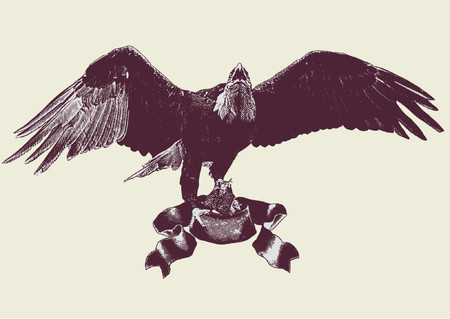 falcons: graphic vector illustration of a n eagle spreading its wings .  Vector illustration. Illustration