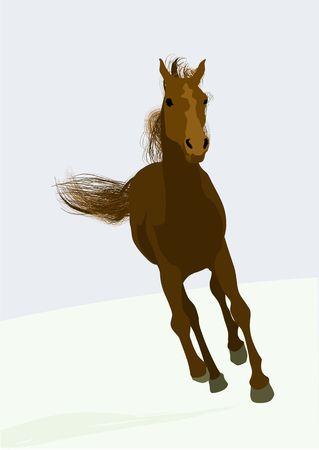 beautifull race-horse photo