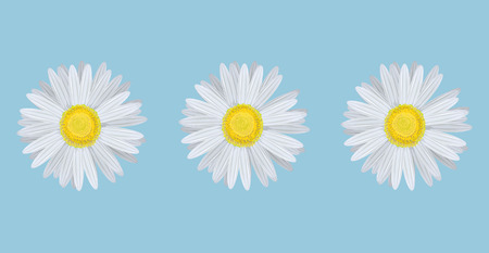 Vector illustration of chamomiles on blue background Vector