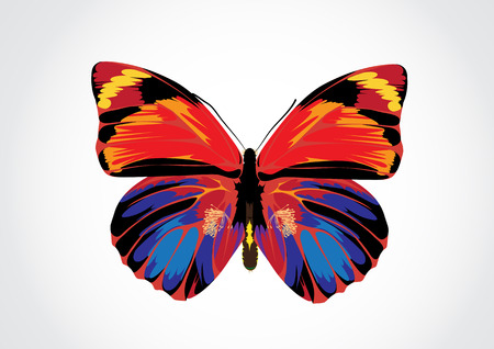 Vector illustration - Beautiful Brightly multicolored Butterfly Stock Vector - 3390816