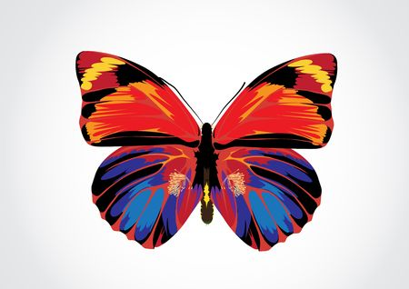 Vector illustration - Beautiful Brightly multicolored Butterfly illustration