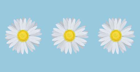 Vector illustration of chamomiles on blue background illustration