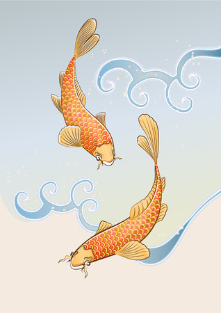 japanese food: Vector illustration of two koi carps splashing in water and swiming around in a cool pond.