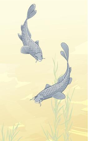 carp fishing: Illustrazione vettoriale di due carpe koi schizzi in acqua e nuota in uno stagno.