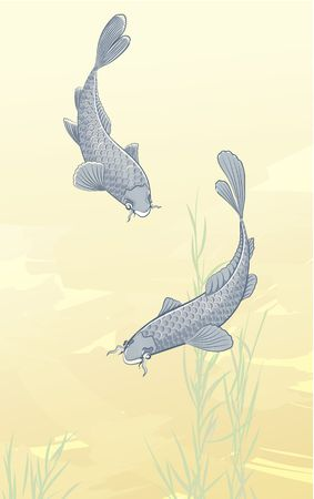 koi fish pond: Vector illustration of two koi carps splashing in water and swimming around in a pond. Stock Photo