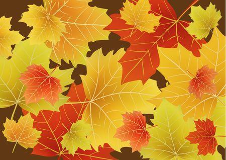 drift: Vector illustration of Beautiful autumn leaves drift across the page.  Stock Photo