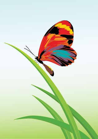 Vector illustration of a green garden background with butterfly and grasses. illustration
