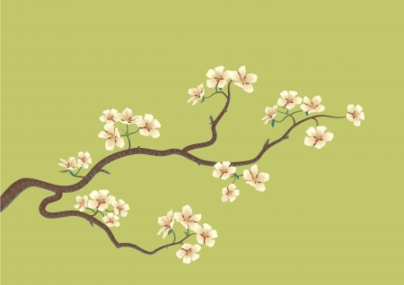 This is the vector illustration of a flowered sakura, japanese cherry tree Illustration