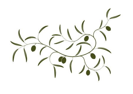 rama de olivo: Ilustraci�n vectorial de la simple rama de olivo con tres aceitunas verdes Vectores