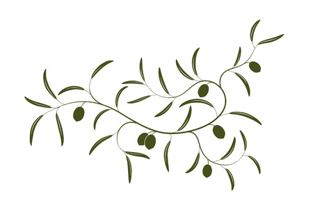 olijf: Vector illustratie van eenvoudige Olijfolieraad tak drie met groene olijven Stock Illustratie