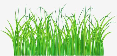 grassy field: Vector illustration of Straight forward green grassy field