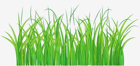 Vector illustration of Straight forward green grassy field Stock Illustration - 4031538