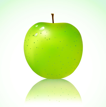 Vector illustration of detailed big shiny green apple Vector