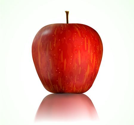 big apple: Vector illustration of detailed big shiny red apple Illustration