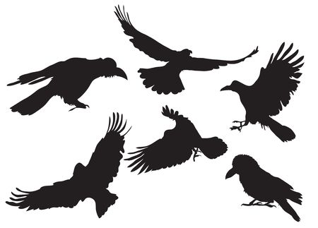corvo imperiale: insieme di illustrazione di corvo silhouette in volo diverse posizioni  Archivio Fotografico